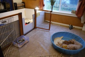 Our puppy nursing room.