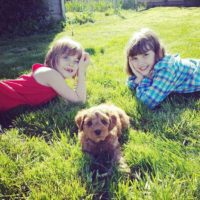 labradodle breeders therapy Puppy Culture