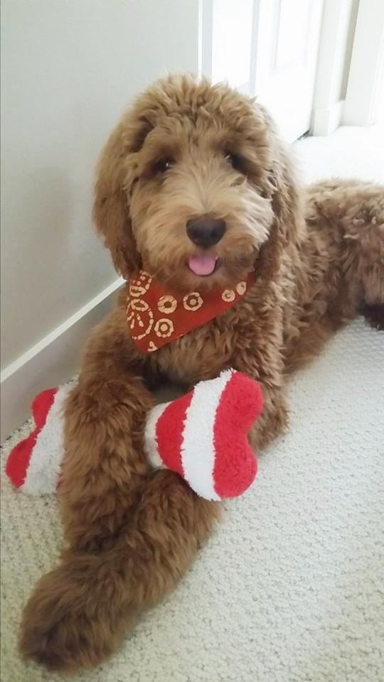 Adopt A Dog Bolton