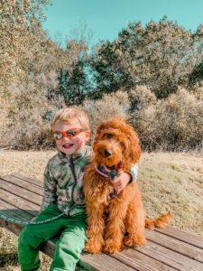 Oregon Australian labradoodles best breeder
