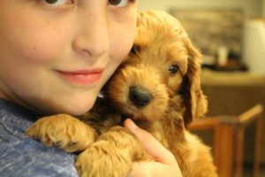 Vancouver Washington labradoodle puppy breeders